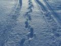 Zima, ślady