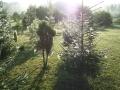 Drzewa, nasadzenia