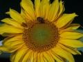 Kwiat, owady